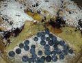 Ciasto bezproszkowe z owocami
