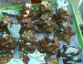 Korzenne pierniczki i choinki Bożonarodzeniowe