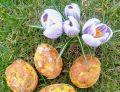 Zapiekane jaja faszerowane