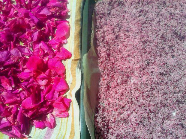 Cukier różany a`la Igraszki Losu