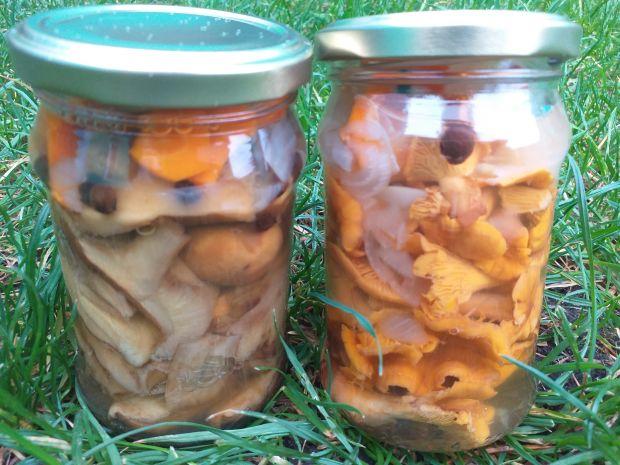 Grzyby marynowane z miodem, cebulą i marchewką