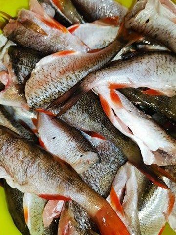 Kotlety rybne.