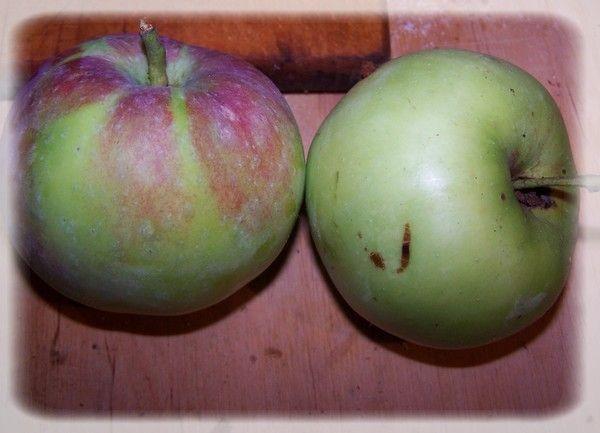 Mus jabłkowy z jeżynami