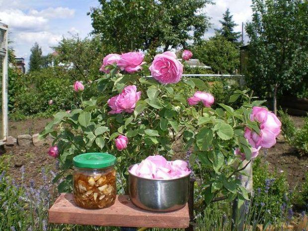 Róża- płatki w syropie