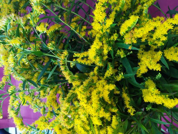 Syrop z kwiatów nawłoci