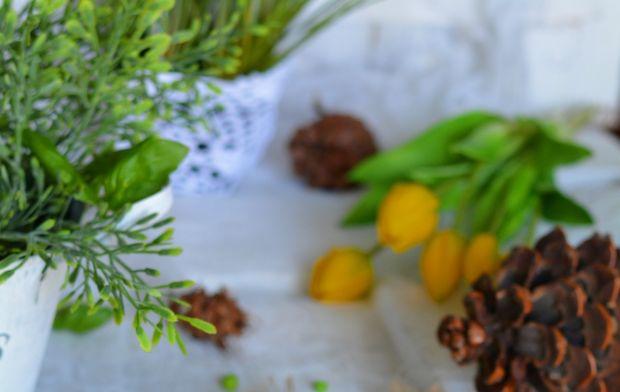 Polędwiczki prowansalskie z sosem pieczarkowym