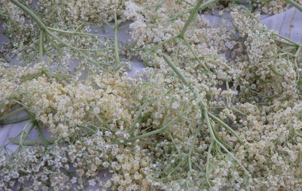 Syrop z kwiatów czarnego bzu
